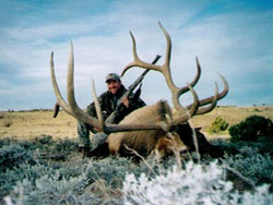 Another incredible Nevada trophy bull taken by a Purple Sage Outfitting client
